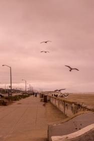 Ocean Beach, Lands End, San Francisco