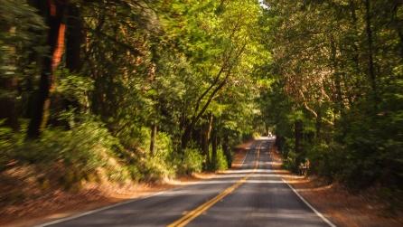 Big Basin Redwood SP, Kalifornien