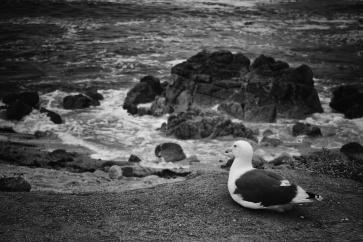 Pacific Grove, Monterey, Kalifornien